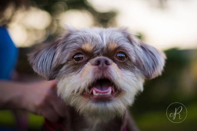 Brownie | Fall Pet Photo Session | Lovettsville, VA