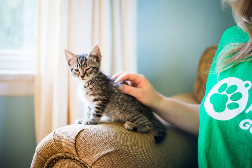 Pet photographer Frederick, MD