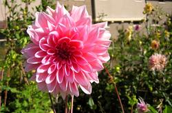 Little Flower Pink