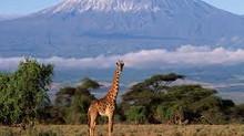 Kaplumbağı mı, Zürafağı mı?