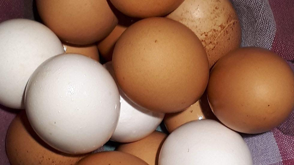 Full Season of Eggs