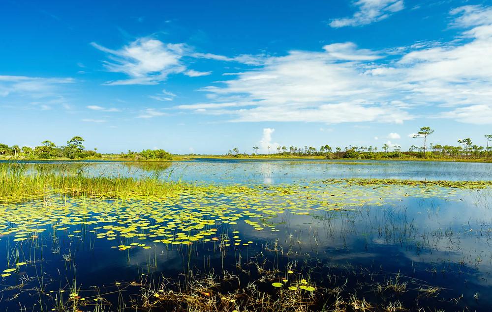 Parc des Everglades