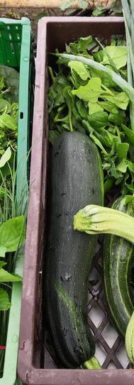 Salat/Gemüse/Kräuter