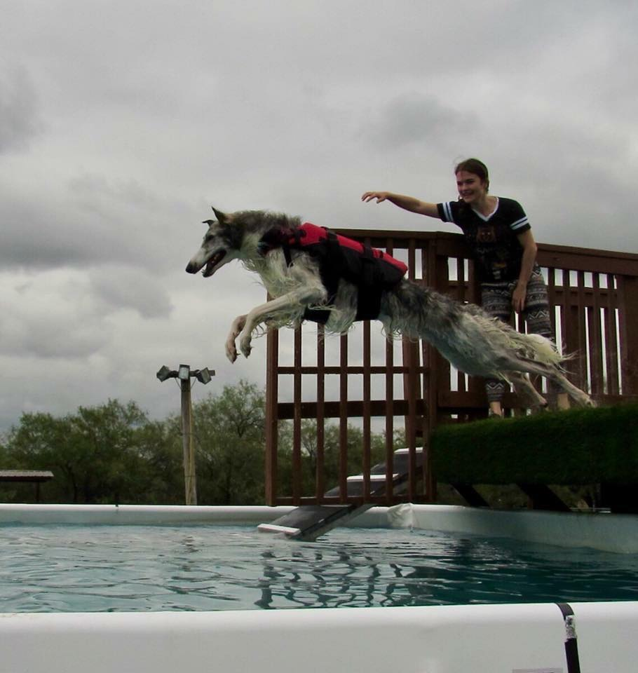 Brexit dock diving at 2 years