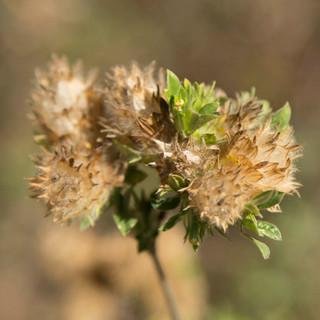 Flor do Cerrado 30x30a.jpg