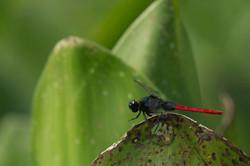 Pantanal fotografias para decoração