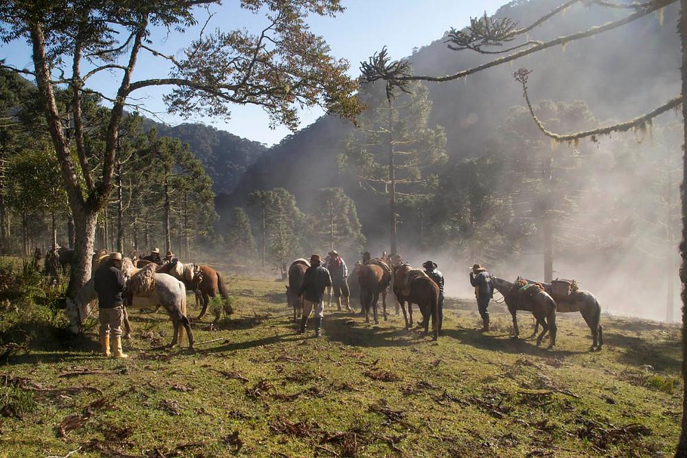 Tropeiros e seus cavalos em uma pausa para o descanso