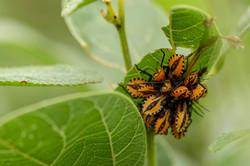 Fauna do Cerrado - Chapada Veadeiros