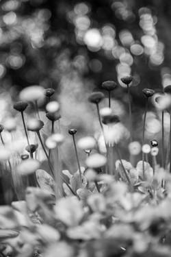 jardim botanico xxx Islandia
