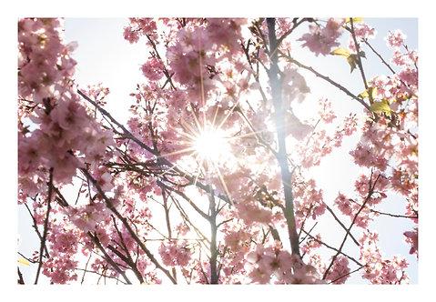 Flor da terra do sol nascente