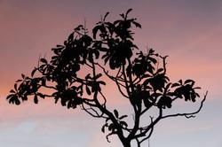 Jalapão fotografias para decoração