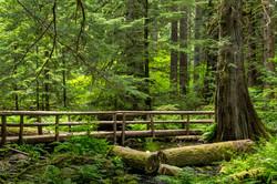 Oregon - USA