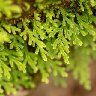 Árvore de pau 1