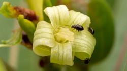 Flores e fotografia macro
