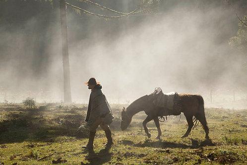 Tropeiro e cavalo