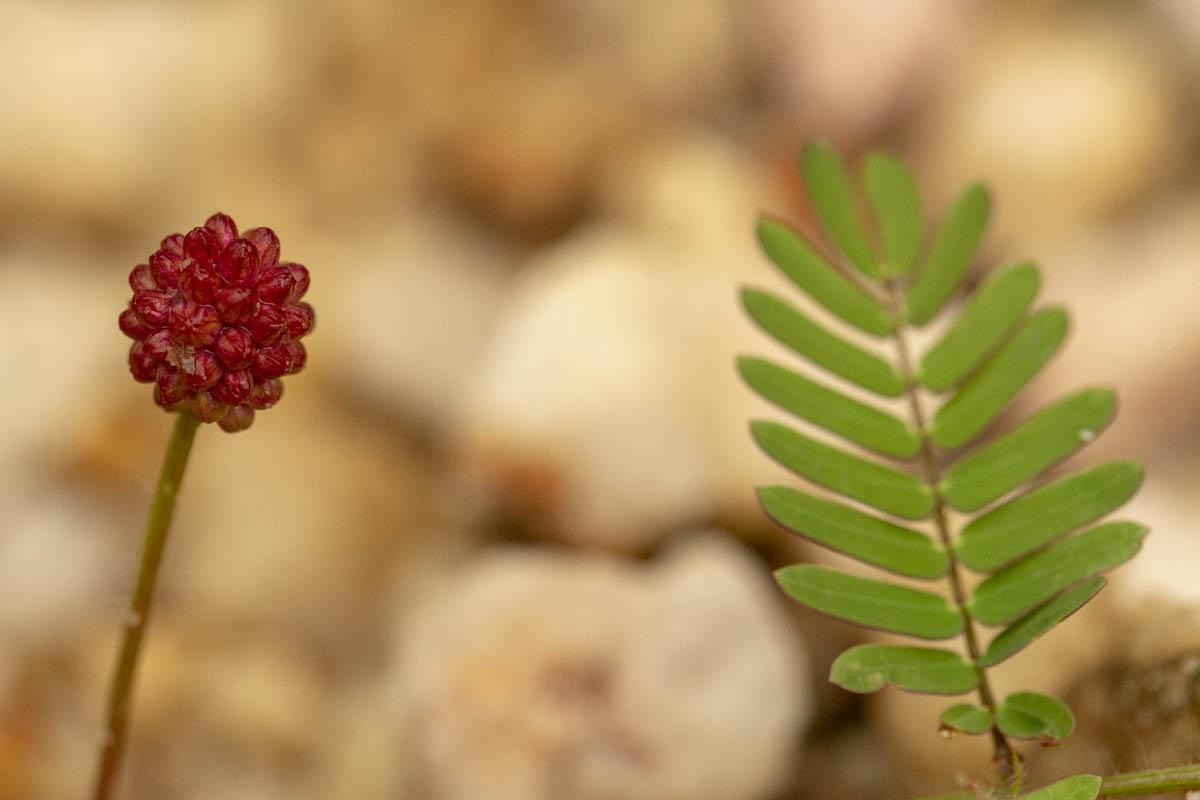Flora do Cerrado - Chapada Veadeiros