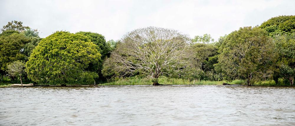 Natureza intocada nos arredores da ilha de Parintins no Amazonas