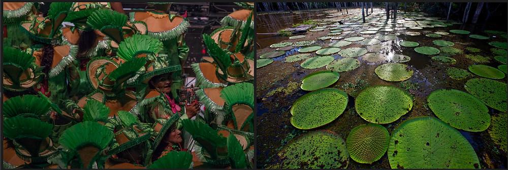 Imagem do Projeto Natureza em Festa: à esquerda detalhes da indumentária da marujada (bateria do Boi Caprichoso de Parintins) e à direita, vitórias régias na Amazônia brasileira