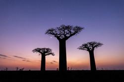 Baobás - Madagascar