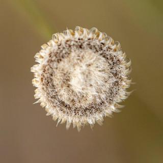 Caroço de flor 30 x 30