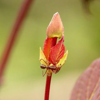 Flor de folha com formiga