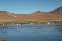 Atacama fotografias para decoração