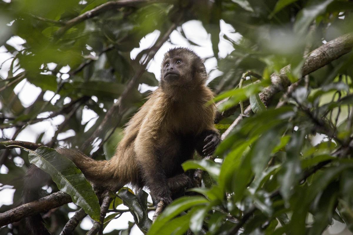 Macaco observando a paisagem