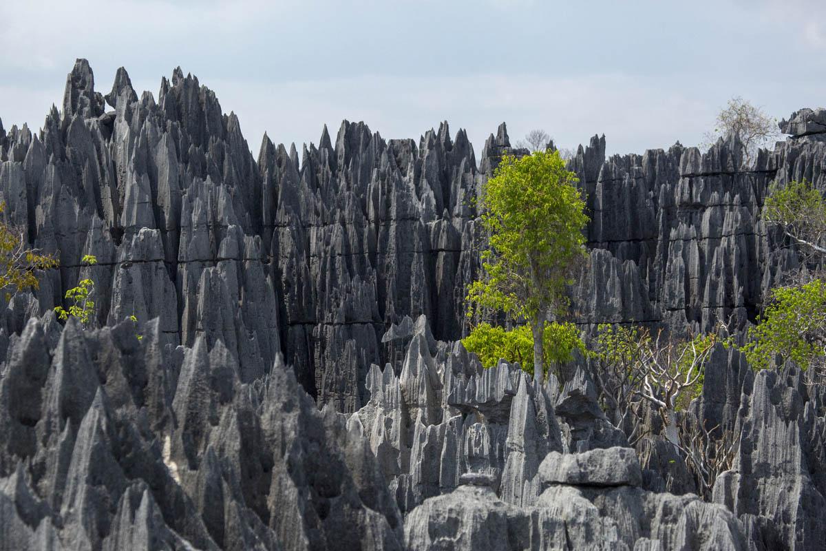 Tsing de Bemaraha - Madagascar