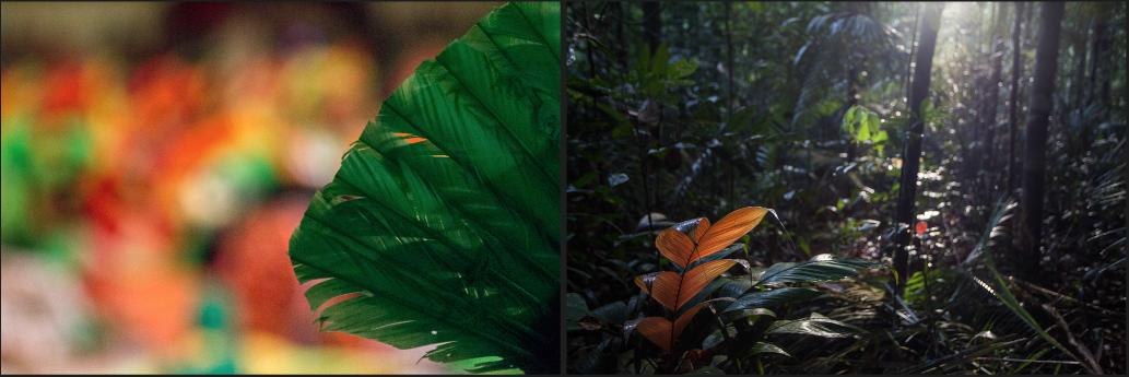 Amazonia e o Boi Bumbá