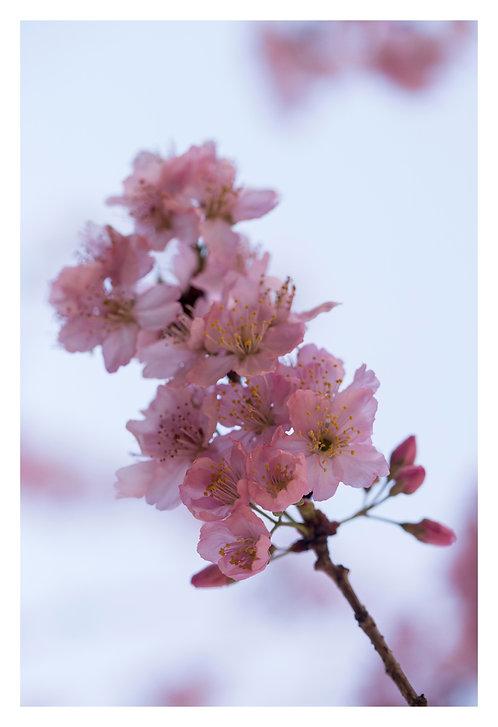 Profusão de flores