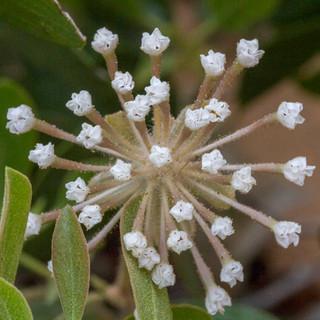 micro flores brancas 30x30