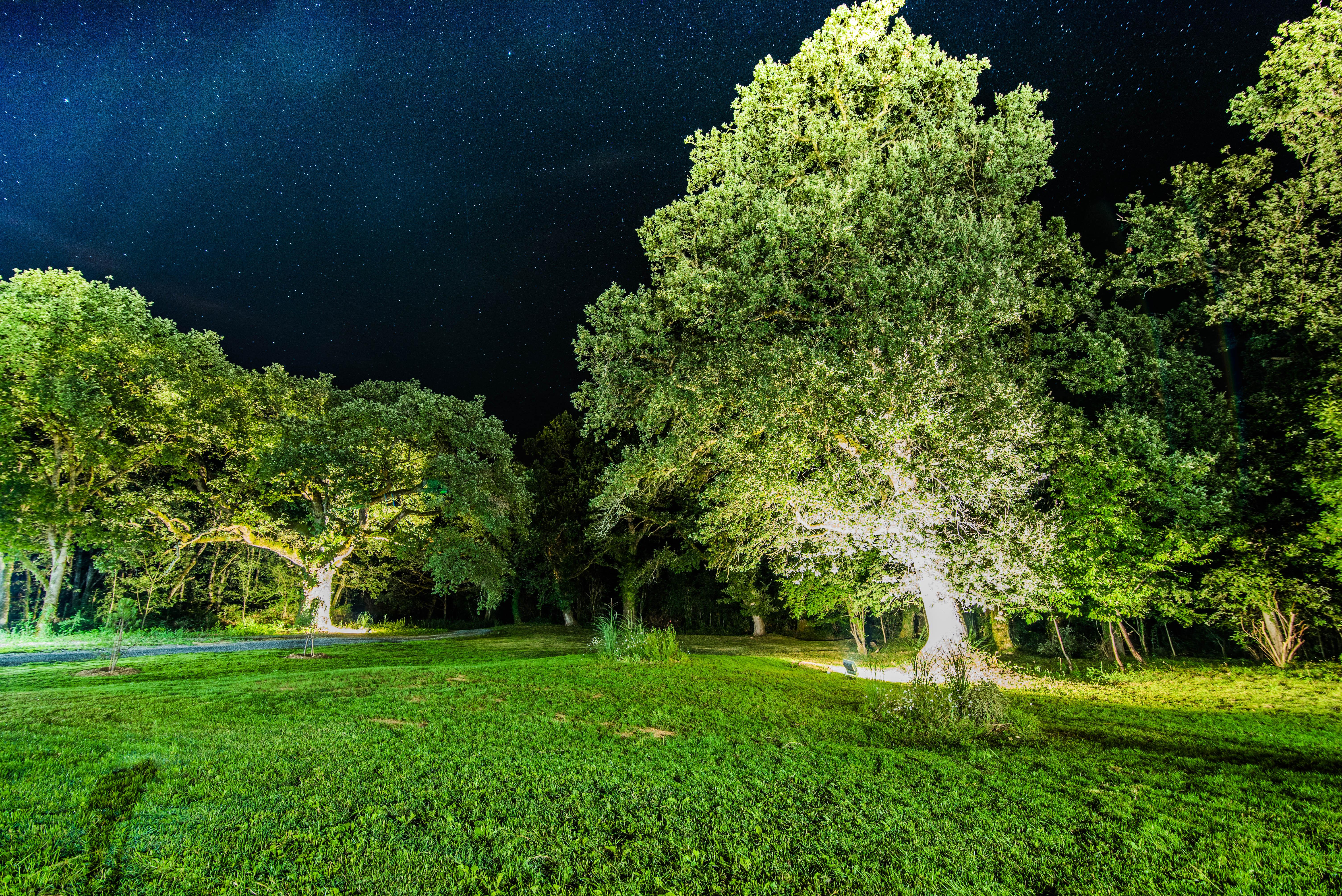 Parc de nuit