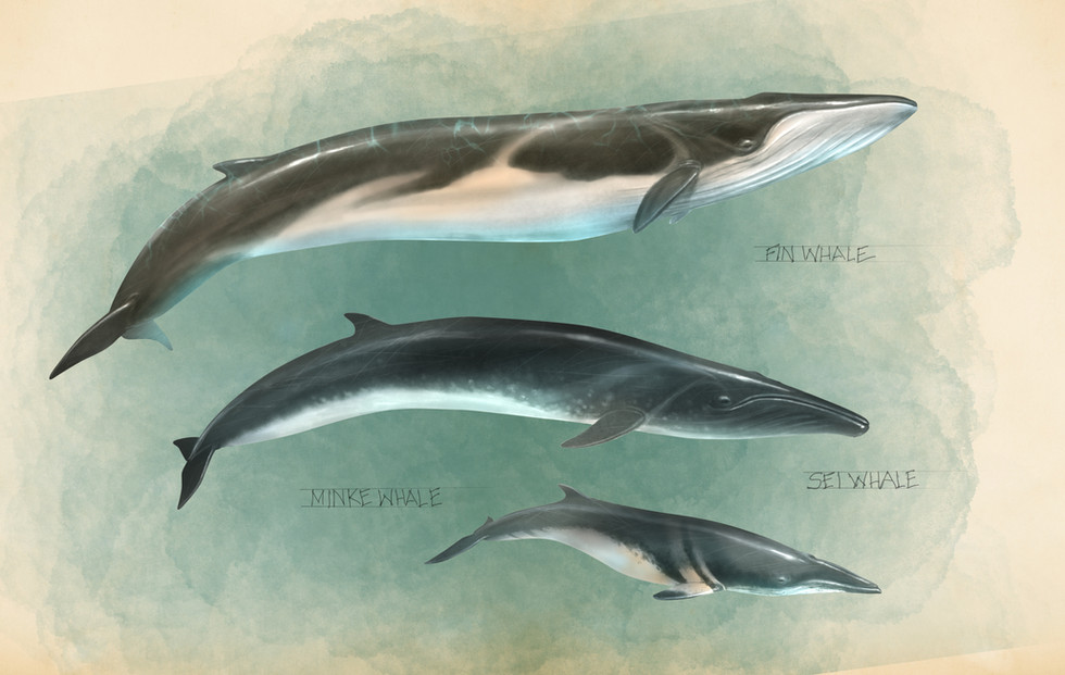 Roqual Whales