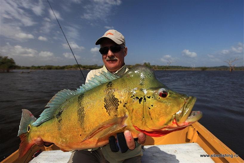 павон рыбалка в Венесуэле