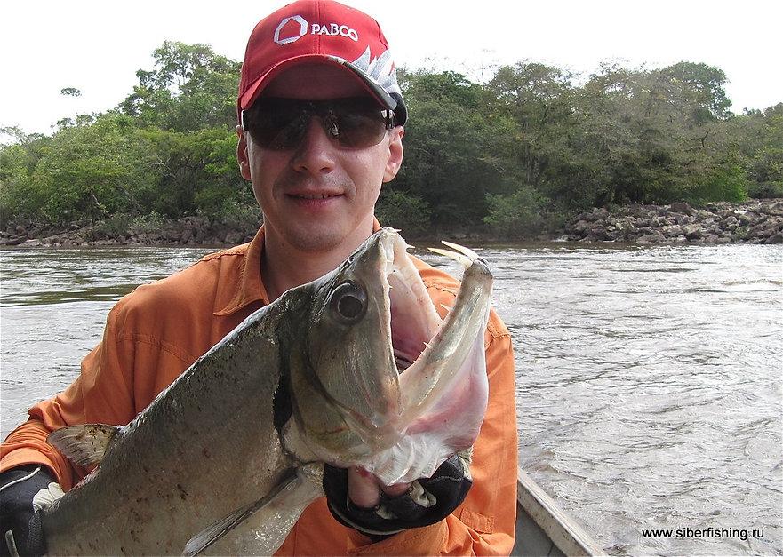 пайяра рыбалка в Венесуэле