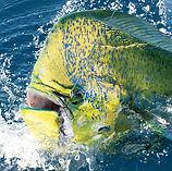 Рыбалка в ОАЭ Фуджейра