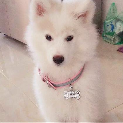 Customized Laser Dog/Cat ID Tag [FREE Collar]