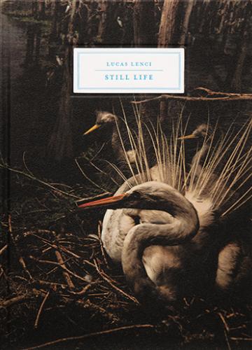 Still Life - Lucas Lenci