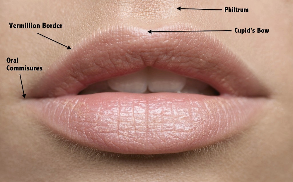 Skinpharma Aesthetics: Lip features