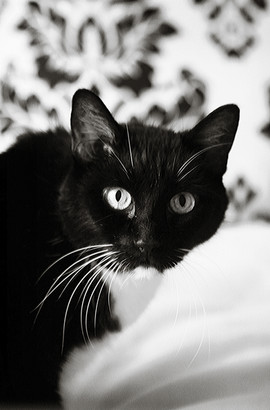 The Best Cat Ever, Jester