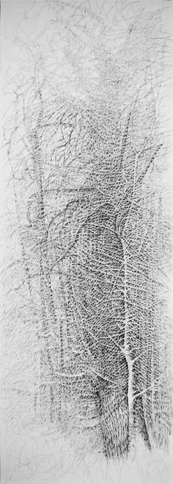 Taillis sous futaie de vieux chênes. 2016. 200 x 70 cm. Stylo roller sur papier Fabriano 2016. 200 x 70 cm. Stylo roller sur papier Fabriano