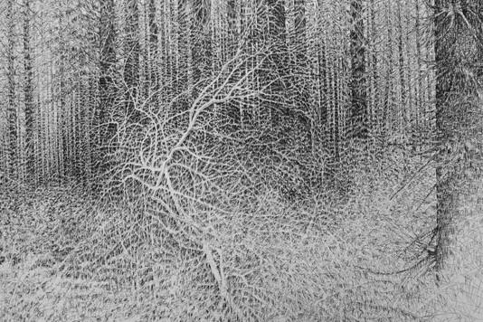 Futaie de pins Laricios I, détail. 2015. 160 x 200 cm