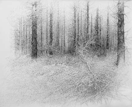 Futaie de pins Laricios I. 2015. 160 x 200 cm. Stylo roller sur papier Canson