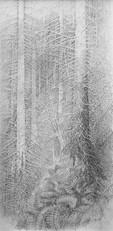Futaie d'épicéas I. 2016. 200 x 100 cm. Stylo roller sur papier Fabriano