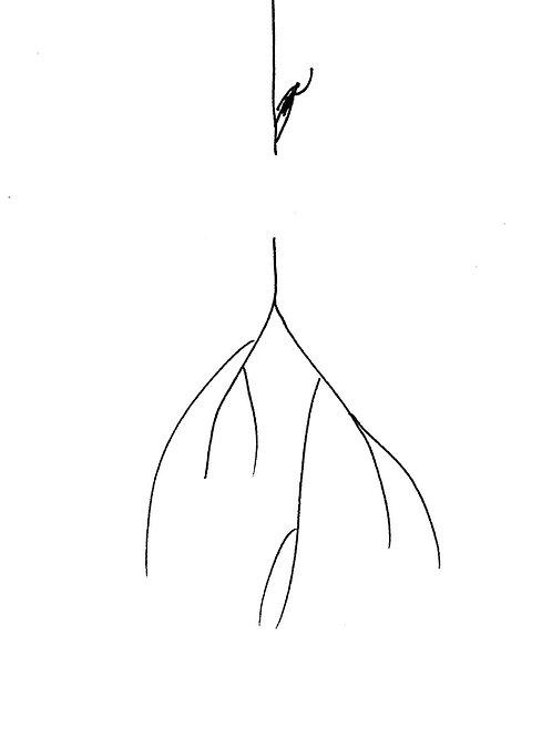 Corte de raíz