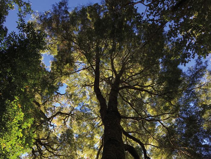 Despierta tus sentidos en la Reserva Natural El Triwe