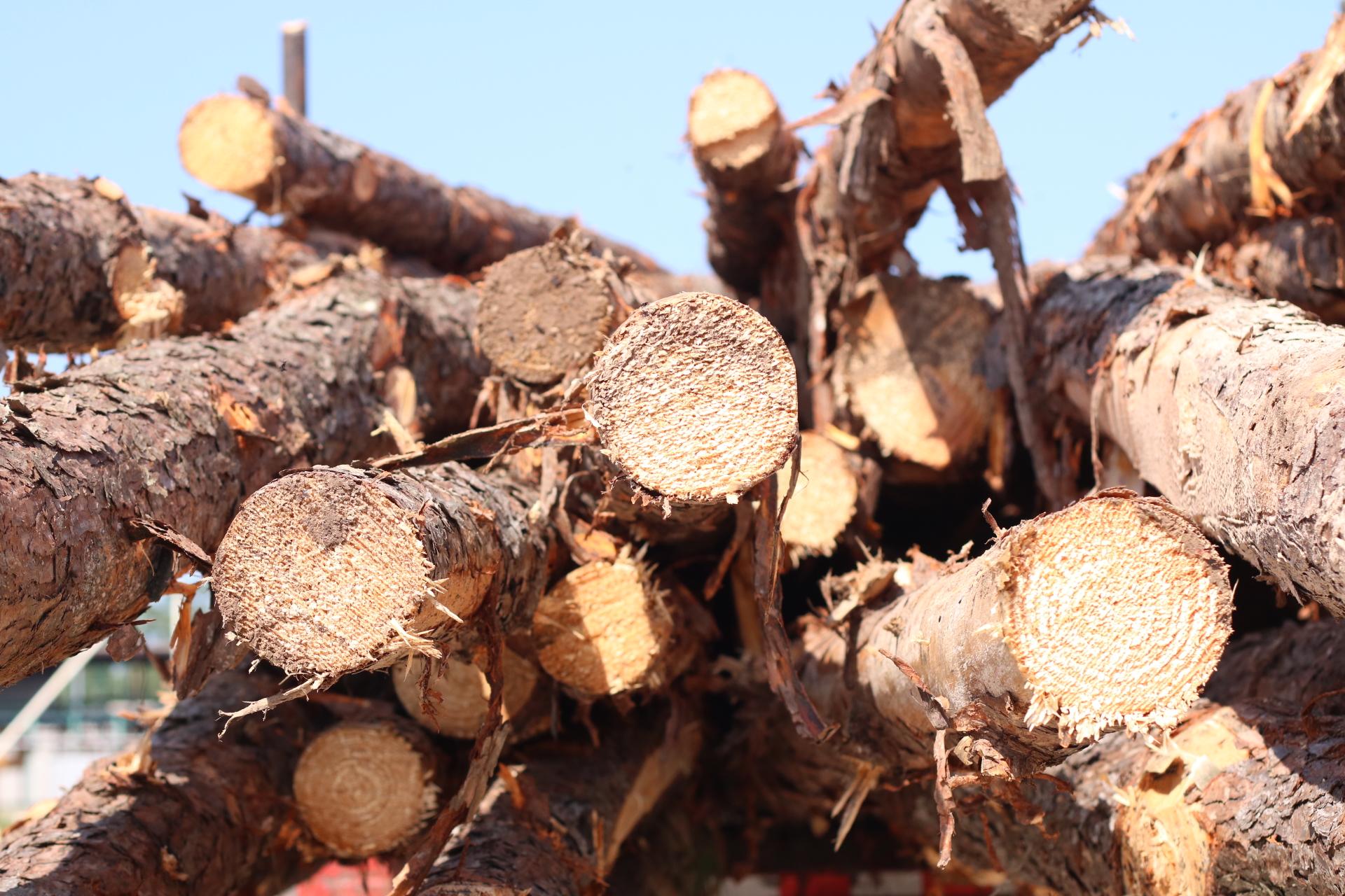 Steely Lumber