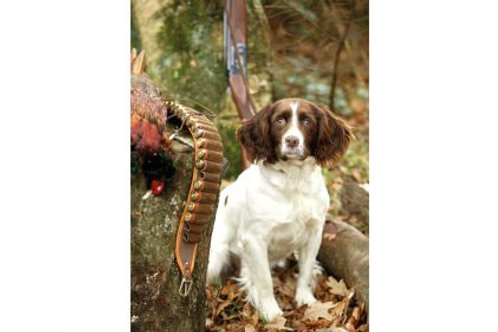 Greetings Cards Springer Spaniel Pack of 6 by Gun and Game