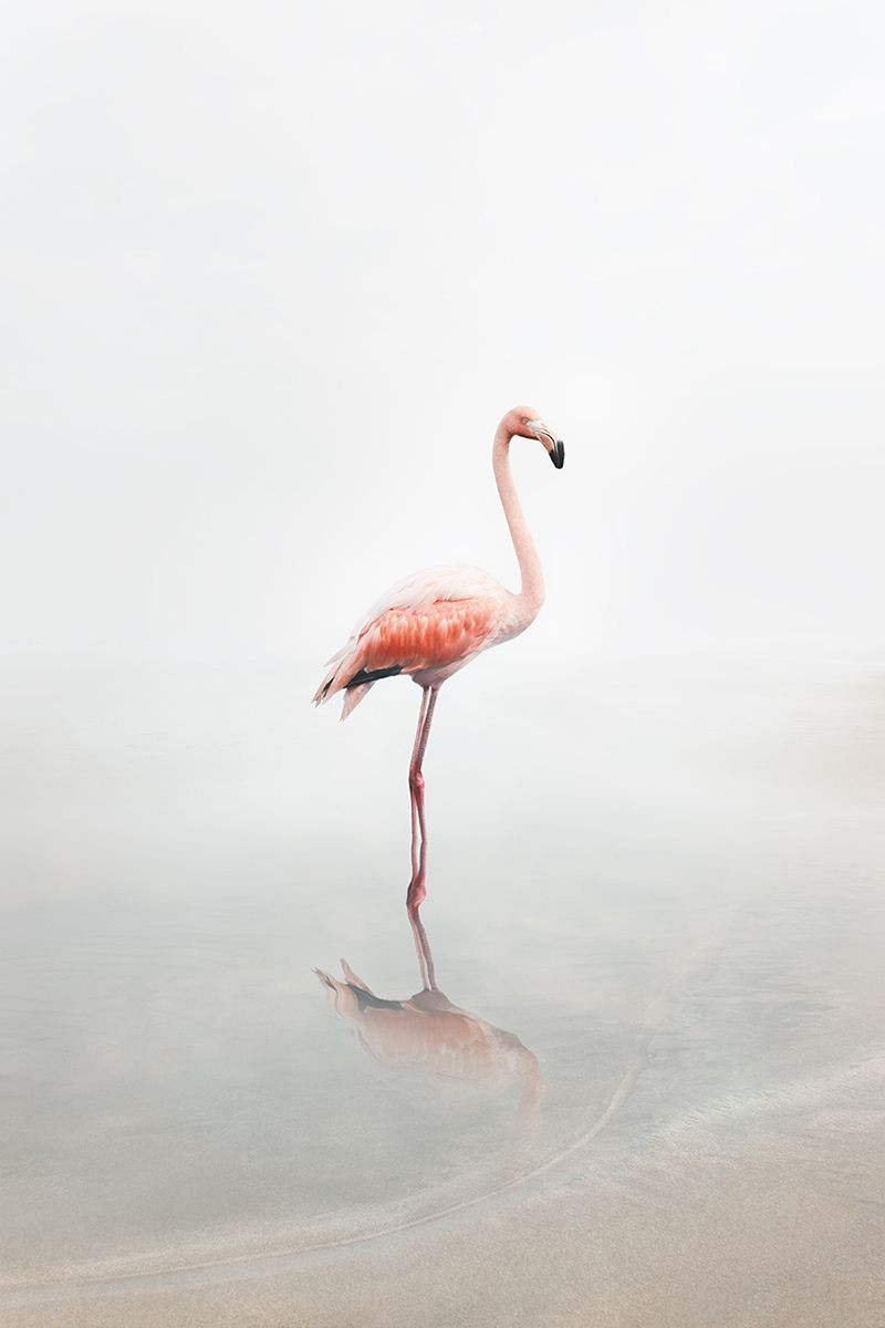 For Now Flamingo, from the series Meditations 2019-2020 by Alice Zilberberg