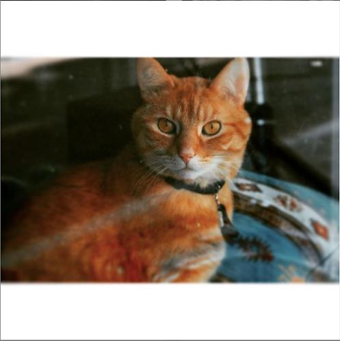 Dutch Cat by Wendy Volmer
